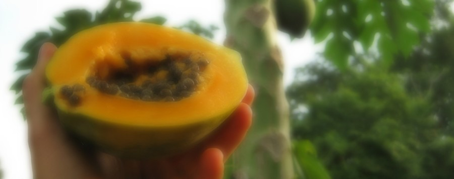 The Peaches to Papayas Project