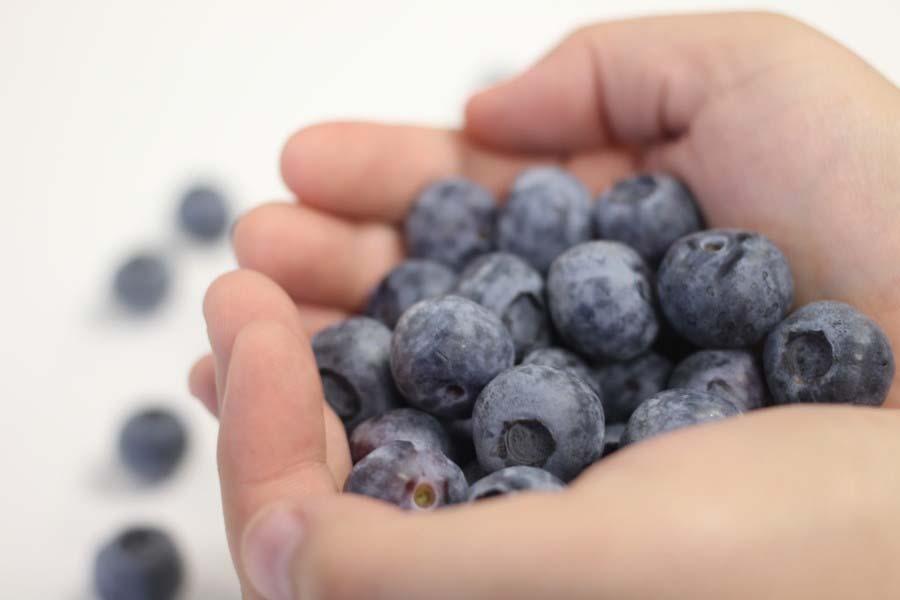 Organic Blueberry Availability